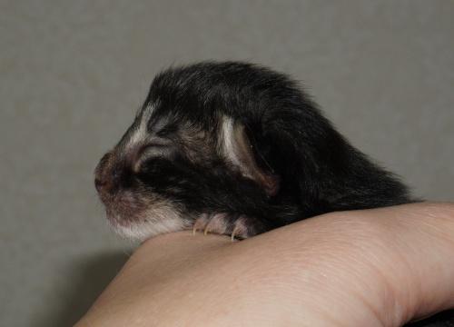 newborn  - the profile