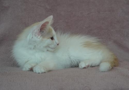 14 weeks old