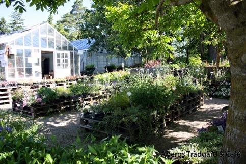 Åbergs trädgård öppettider