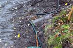 Foto: Leif Höglund. Grunt liggande avgrävd kabel