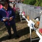 Kaninerna trivs i solen