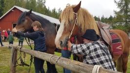 Bondgården förr 2021.09.11 Härliga hästar görs redo för ridning