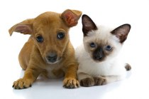 Hund & Kattfoder