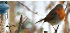 Vildfågelfoder