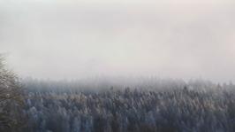 Villa Arelid På Miljö Vinter skog