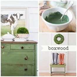 Boxwood 230g - Boxwood 230g