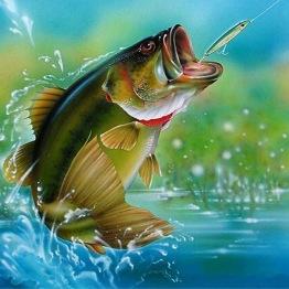 Fisk, rund, 20x25cm - Fisk