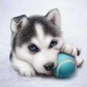 Hund boll, fyrkant, 20x20cm