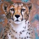 Geopard, fyrkant, 20x25cm