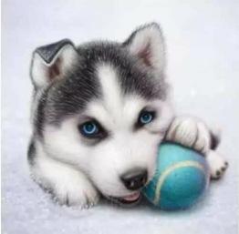 Hund boll, fyrkant, 20x20cm - Hund boll