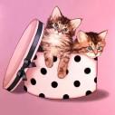 Katter i hattlåda, rund, 20x20cm