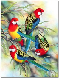 Fåglar, fyrkant 40x50cm - Fåglar 40x50cm