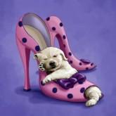 Hund i sko, fyrkant, 20x20cm