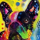 Hund färgglad, fyrkant, 20x25cm