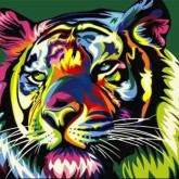 Tiger, fyrkant, 25x20cm