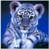 Leveranstid 1,5v - Tigerbebis, fyrkant 40x40cm