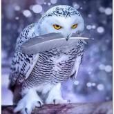 Vinteruggla, fyrkant 45x60cm