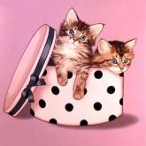 Katter i hattlåda, fyrkant, 20x20cm