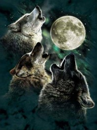 Vargar i fullmåne, fyrkantig, 50x70cm - Vargar i fullmåne 50x70cm fyrkantig pärla