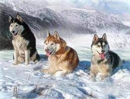 Snöhundar, fyrkant, 80x60cm - Knähundar 80x60cm fyrkantig pärla