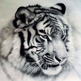 Tiger s/v, fyrkant, 50x50cm - Tiger s/v, 50x50cm fyrkantig pärla
