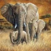 Leveranstid 1,5v. Elefant vandring, fyrkant, 60x50cm