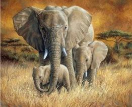Leveranstid 1,5v. Elefant vandring, fyrkant, 60x50cm - Elefant vandring, fyrkant, 60x50cm
