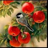 Fågel bland äpplen, fyrkant, 50x50cm