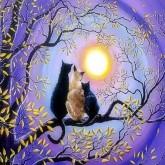 Katter i solnedgång, fyrkant, 50x40cm