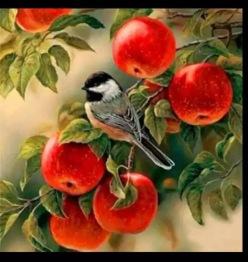 Fågel bland äpplen, fyrkant, 50x50cm - Fågel bland äpplen, fyrkant, 50x50cm