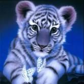 Tiger bebis, fyrkant 30x30cm