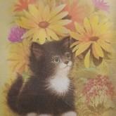 Katt med blommor, fyrkant 20x25cm