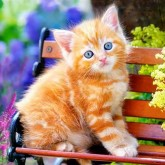 Katt på bänk, fyrkant 25x20cm