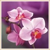 Orkidé, fyrkant, 40x40cm
