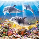 Delfiner, fyrkant 50x50cm
