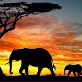 Elefant vandring, fyrkant 40x30cm