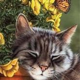 Vilande katt, fyrkant 40x50cm
