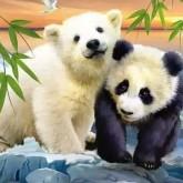Panda och isbjörn, men 50x40cm