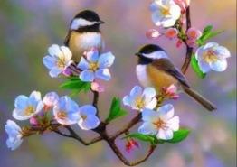 Fåglar på körsbärskvist, rund 40x30cm - Fåglar på körsbärskvist, rund 40x30cm
