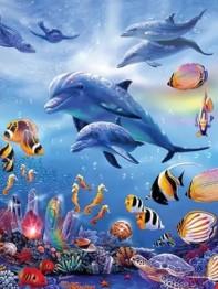 Delfiner, fyrkant 50x60cm - I lager februari