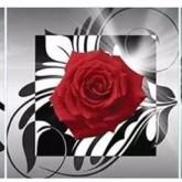 3 dels rosor, fyrkant 40x40cm