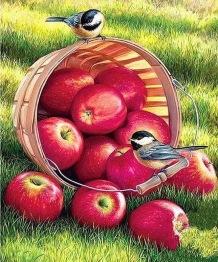 Fåglar på äppelkorg, fyrkant 50x60cm - Fåglar på äppelkorg, fyrkant 50x60cm