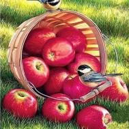 Fåglar på äppelkorg, fyrkant 50x60cm