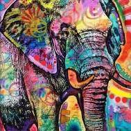 Indisk elefant färgglad, fyrkant 70x90cm