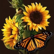 Solros fjäril, fyrkant 50x60cm