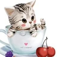 Katt i kopp, fyrkant 30x30cm