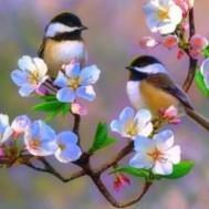 Fåglar på körsbärskvist, rund 40x30cm