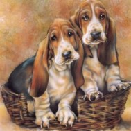 Hundar, rund 30x40cm