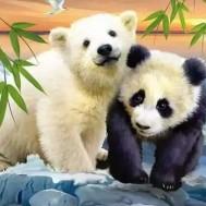 Leveranstid 1,5-2v - Panda och isbjörn, men 50x40cm