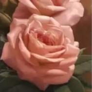 Rosa ros, fyrkant 30x70cm